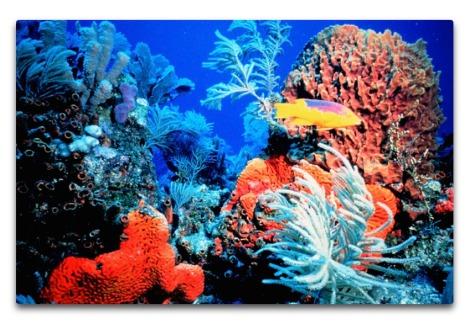 bg coral reef