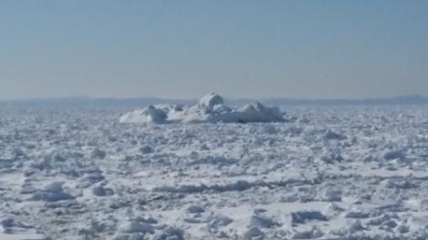 Strait-of-belle-isle pack ice_April 19 2017_Nordik Relais